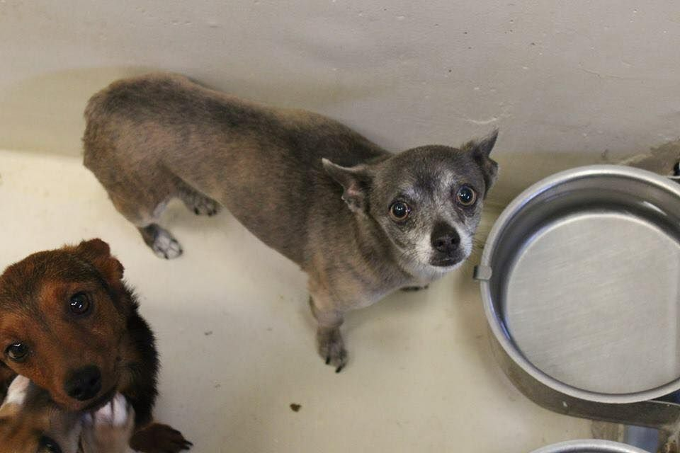 04 25 16 Odessa Tx Speaking Up For Those Who Can T Owner