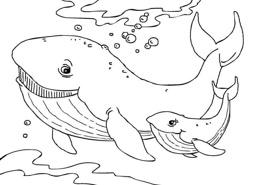 Free Printable Whale Coloring Pages