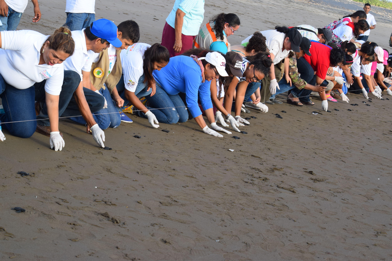 Realizan festival para proteger tortugas marinas