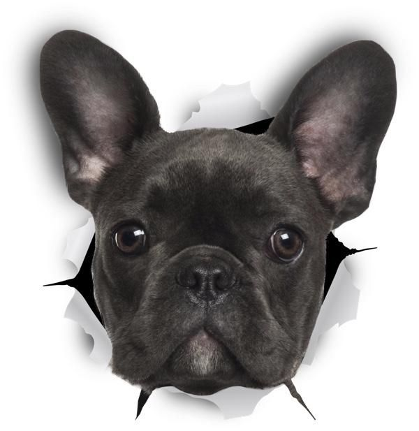 Black French Bulldog Sticker Decals 2 Pack Exclusive French