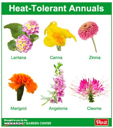 House Plants 6 Heat Tolerant Annuals Http Www Menards Main