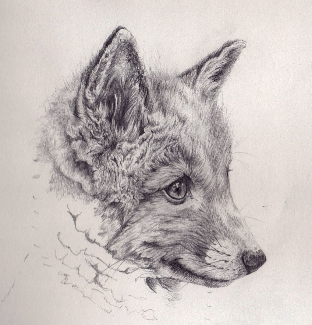 Fox Cub Mechanical Pencil Drawing by akdizzle.deviantart ...