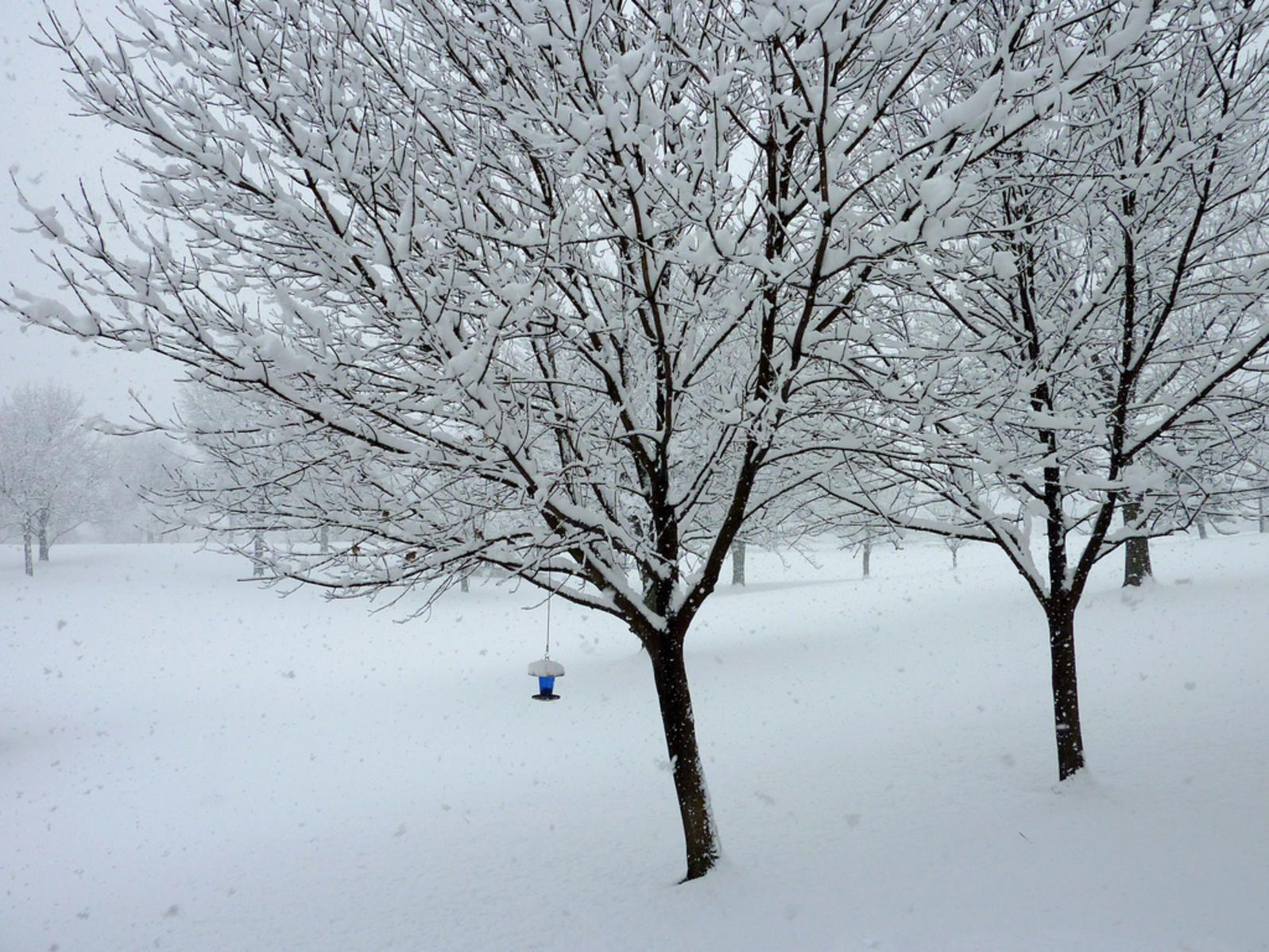 how often to fertilize lawn in northeast
