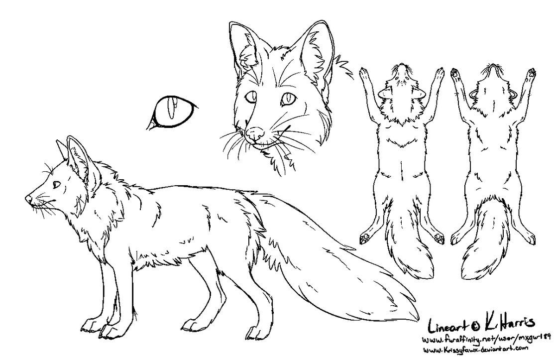 Red Fox Ref Sheet Free Use By Krissyfawx Animal Drawings Dog