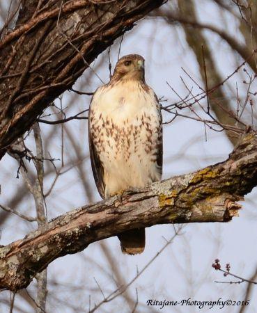 Nature And Travel Photography Classes Beautiful Birds Wild Birds Birds Of Prey