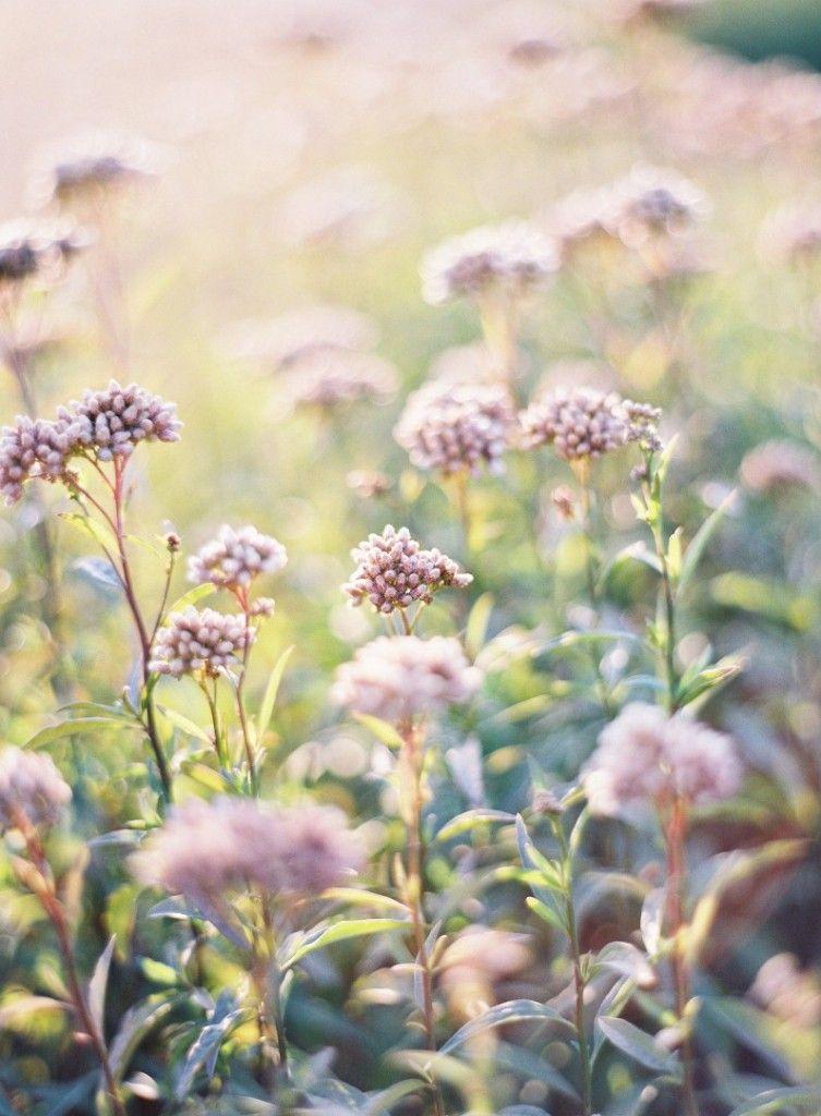 flowers by jose villa
