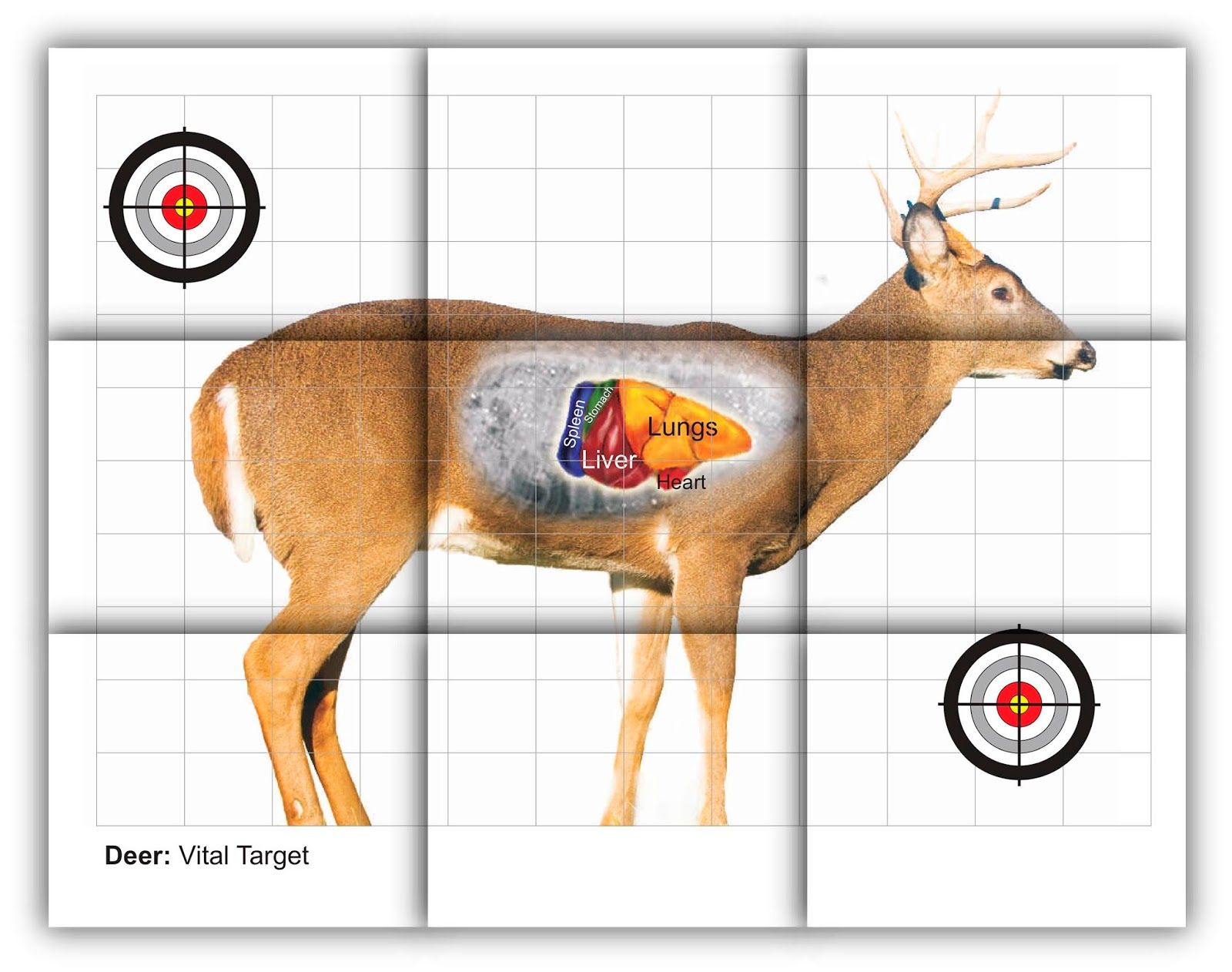 graphic relating to Printable Deer Target named deer vitals concentration cost-free printable taking pictures aims Охота