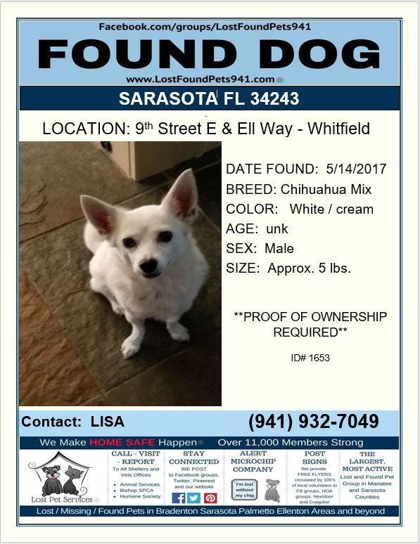 Have You Seen Marley Lostdog Missing Shihtzu Chihuahua Mix