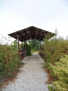 Chino Creek Wetlands and Educational Park: The Beginning
