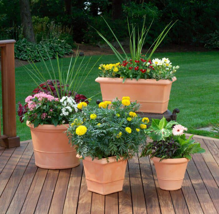 8 Stunning Container Gardening Ideas: 35 Patio Potted Plant And Flower Ideas (Creative And