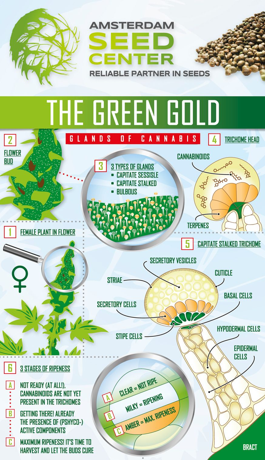 Image result for marijuana harvest trichomes trippy trichomes image result for marijuana harvest trichomes nvjuhfo Image collections