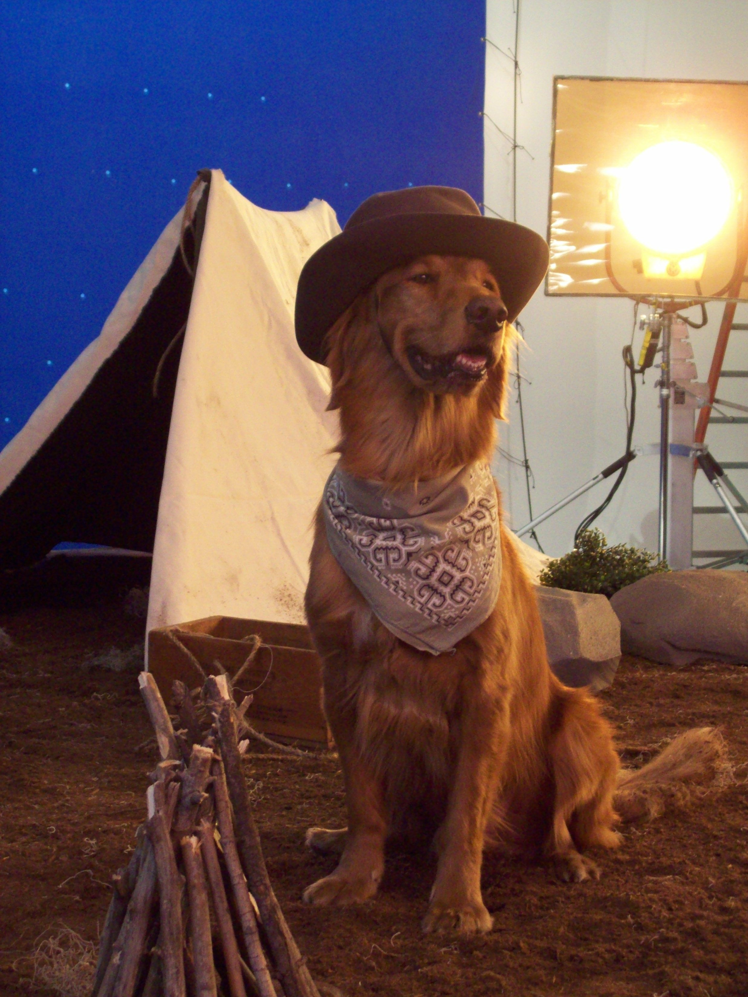 How the West was won? We'd like to think that even cowboys had trusty golden retrievers like Duke by their side.