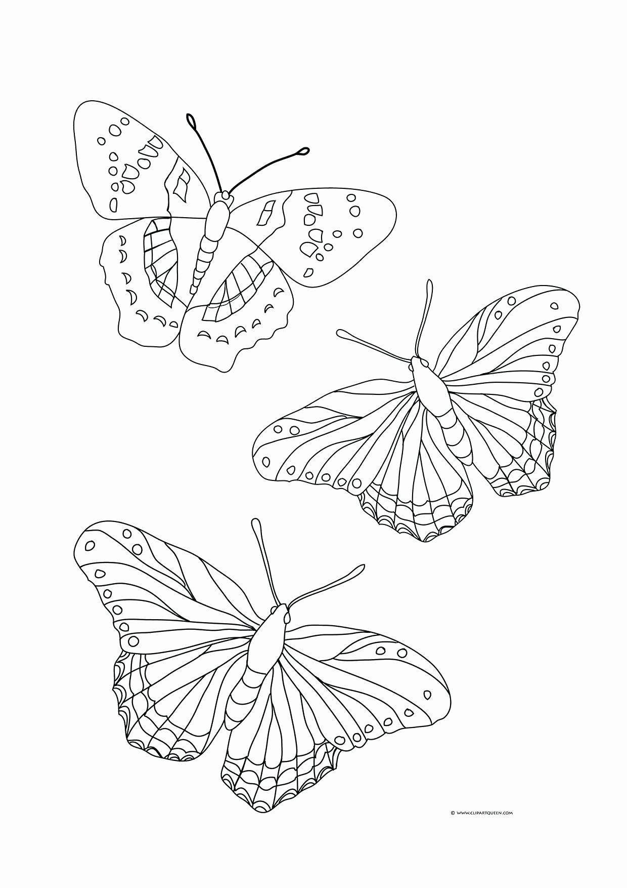 Butterfly With Flowers Coloring Pages New Images Of Butterflies Coloring Pages Amicuscolor Butterfly Coloring Page Free Coloring Pages Shape Coloring Pages
