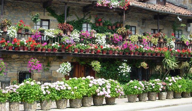 Cómo regar las plantas en macetas Fachadas Originales Pinterest - fachadas originales