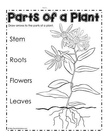 Label Parts of a Plant | Parts of a plant, Plant ...