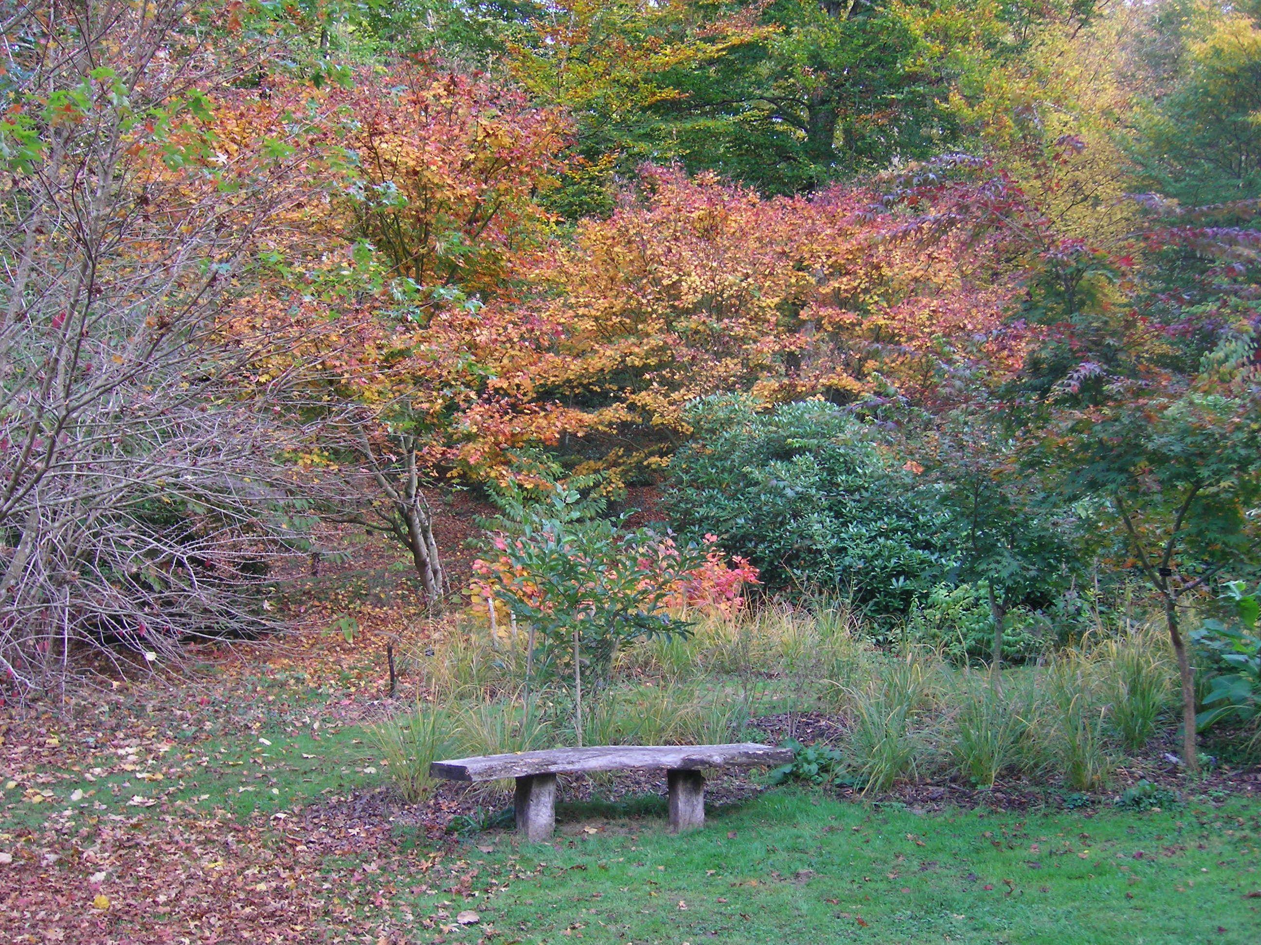 Un banco en el Arboretum de la Sédelle, la Creuse, Francia (foto de mtrd)