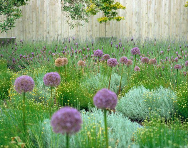 Garden ideas landscaping ideas drought tolerant full for Garden design ideas lavender