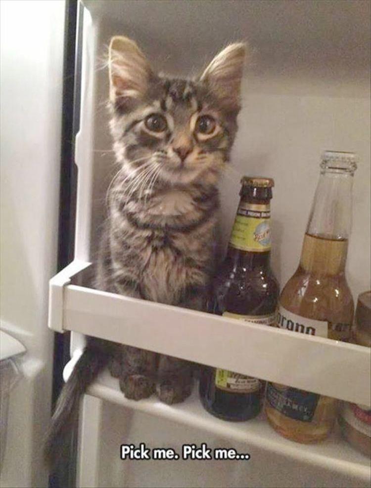 Kitten's Playpen Kittens In A Blender | Cats | Cats, Funny animal