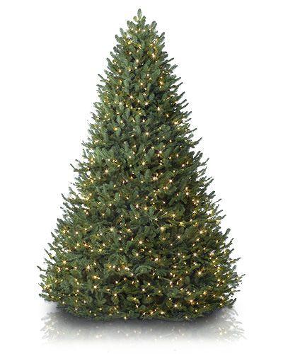 Bh Balsam Fir: Balsam Fir Christmas Tree, Fir