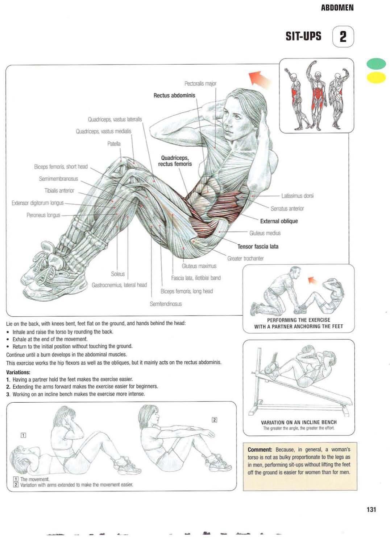 strength training anatomy 2  sit
