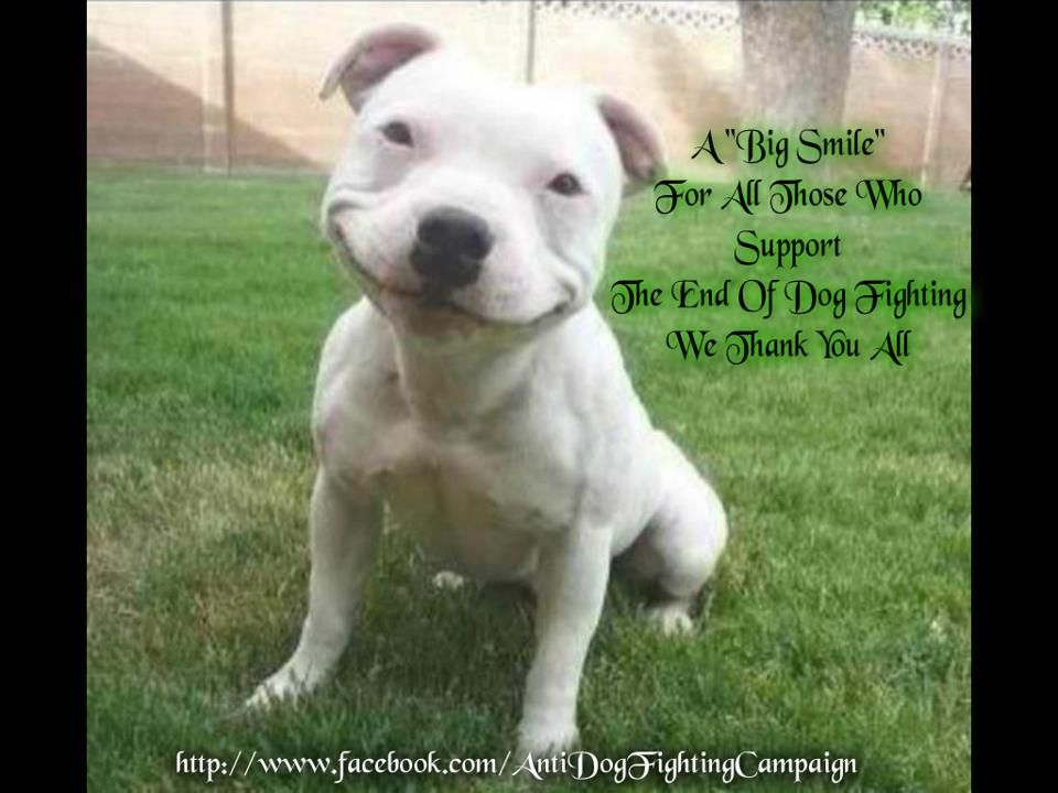 Thank you!! | Cute animals, Smiling dogs, Animals