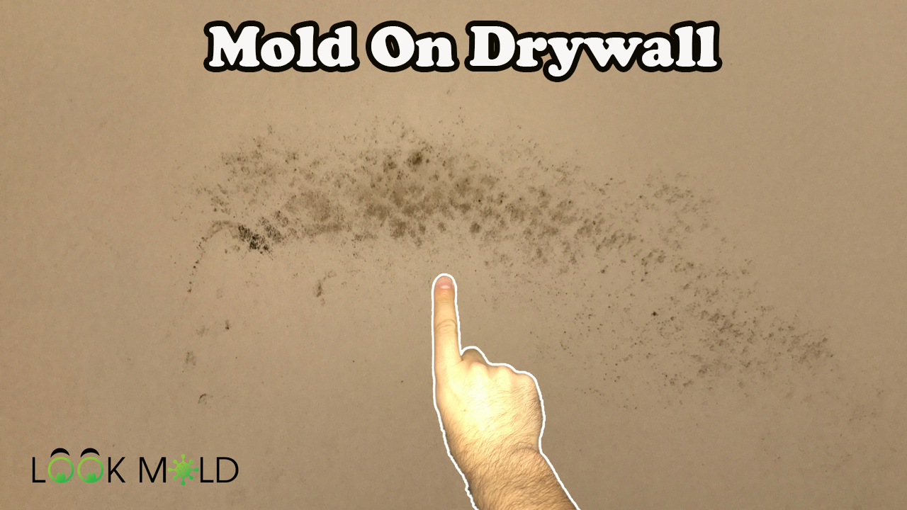 What Does Mold Look Like On Drywall Does It Need To Be Removed This Short Video Describes How To Identify I Mold Prevention Domestic Cleaning Cleaning Advice
