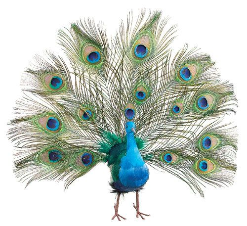 Exquisite Fan Tail Peacock Feathers Wedding Christmas Tree Topper ...