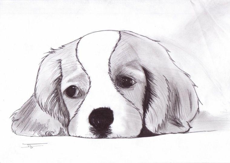 Disegno Di Un Cane Immagini Da Ricopiare Chiaro Scuro A Matita Arte Di Cani Disegni Di Cane Disegni Simpatici