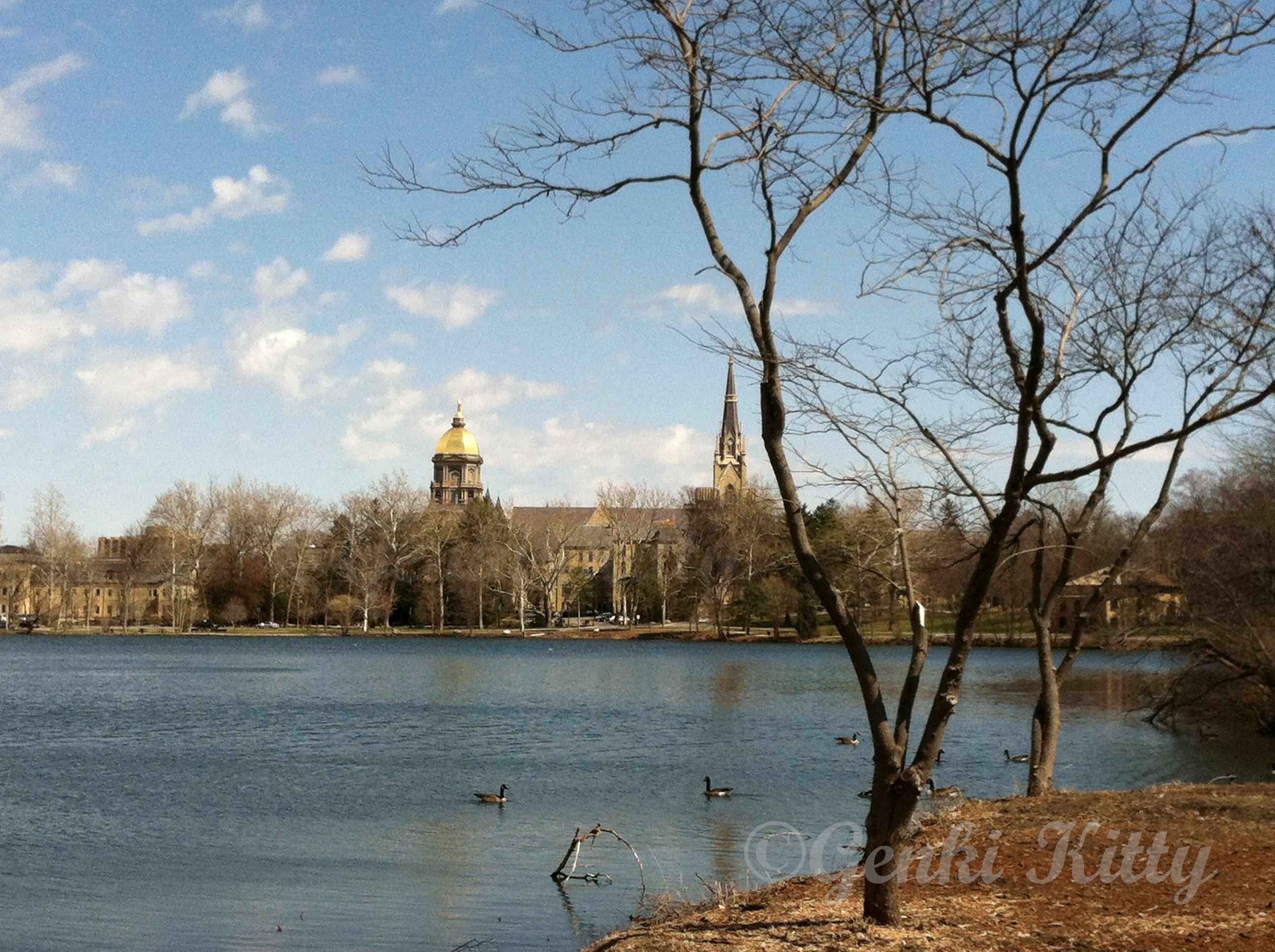 University of Notre Dame in South Bend, IN.  #spring #UND