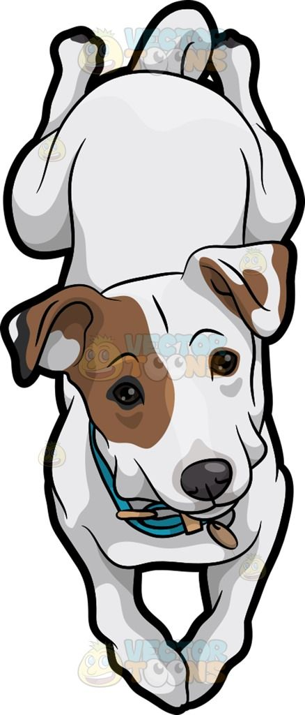 Beautiful Fur Brown Adorable Dog - 30530ea9c5e13083d3095f374537647c  Image_311310  .jpg