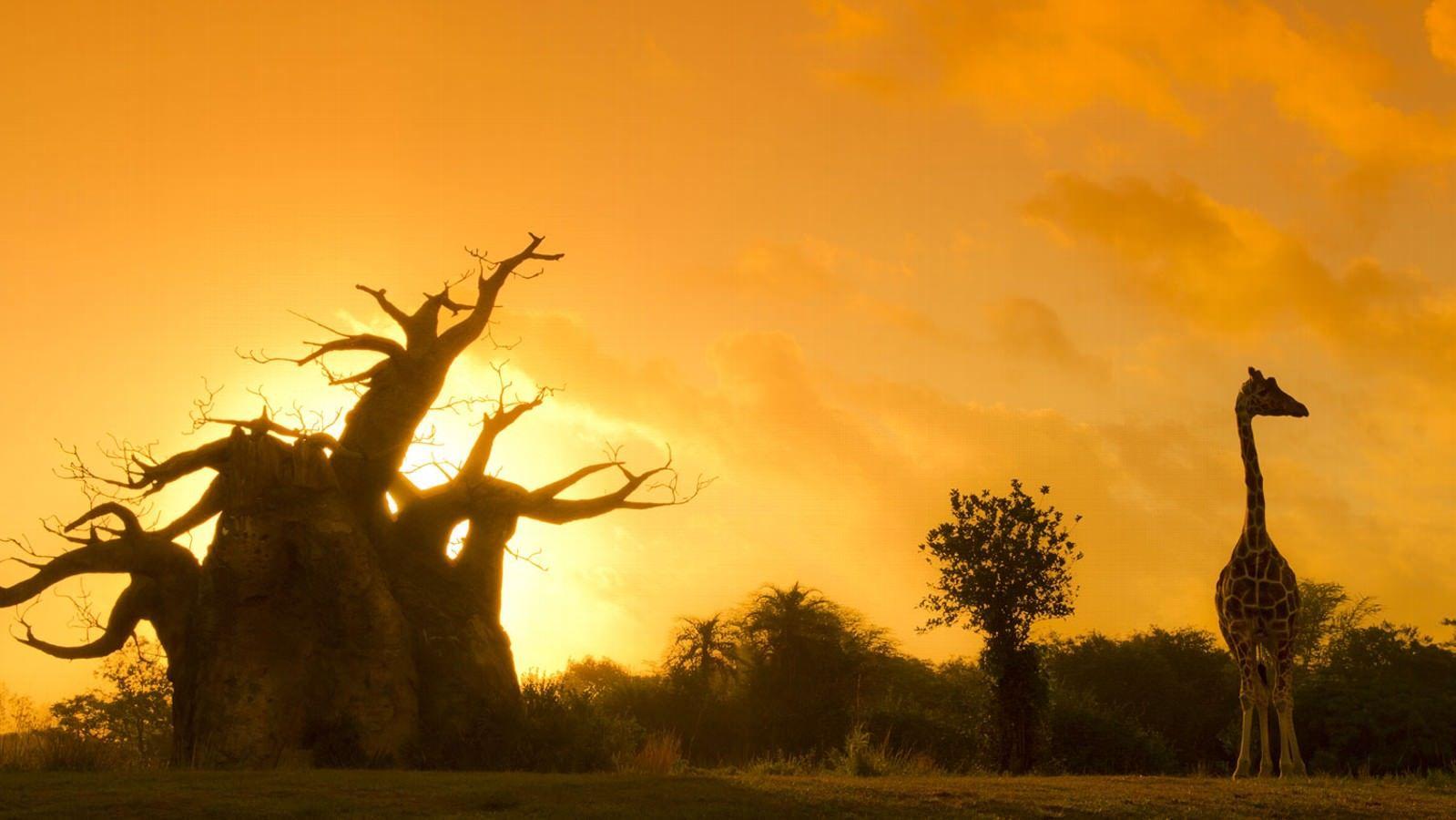 Kilimanjaro Safari Sunset Animal Kingdom