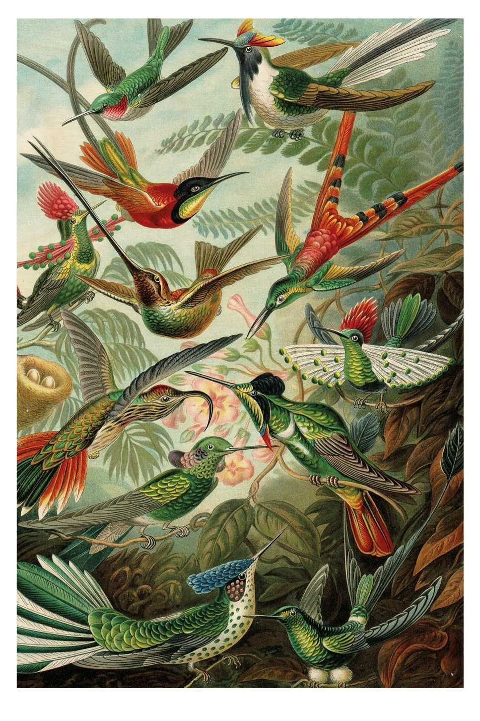 Exotic Birds houten wandpaneel | KEK Amsterdam