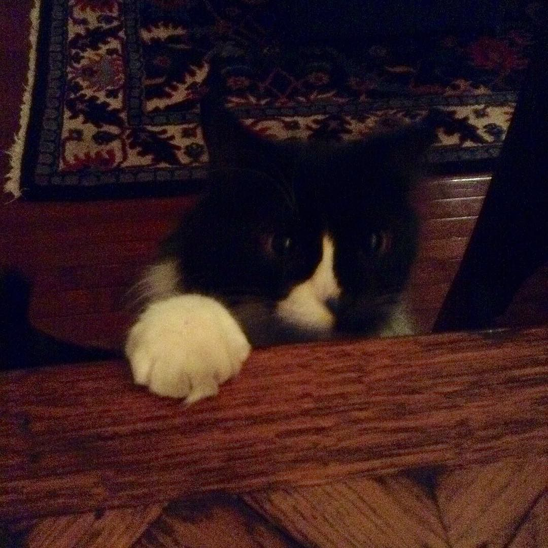 """Whatcha doing?"" #cats #catsofinstagram by jadedjournalista"