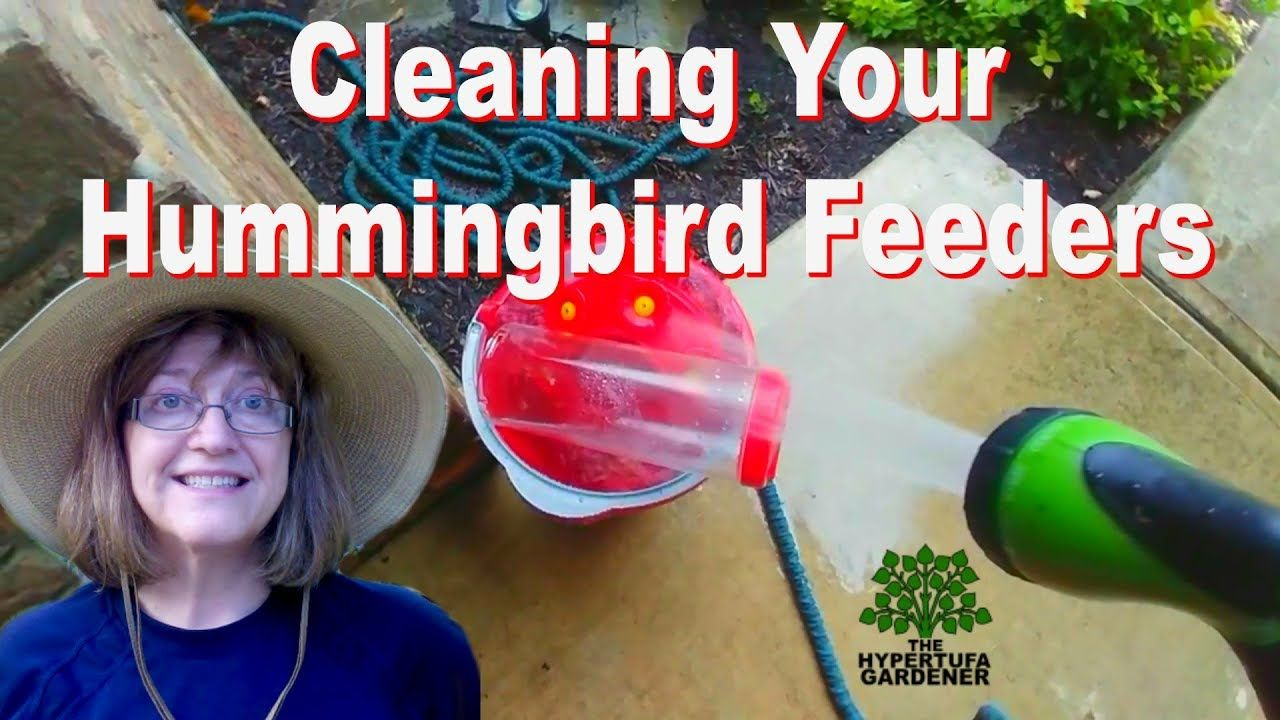 How To Clean Your Hummingbird Feeders It's Important