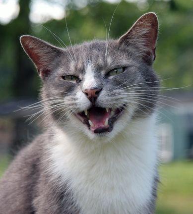 Cat smiling at sanctuary Cat, dog photos, Cute animal