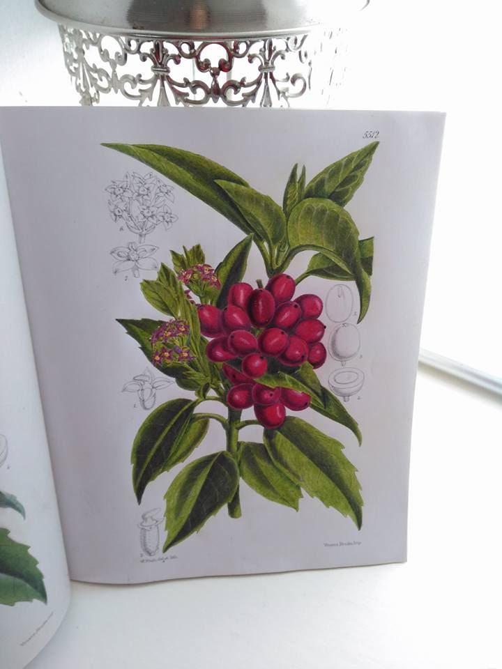 Another Finished Picture From The Kew Gardens Colouring Book Media Used Polychromos