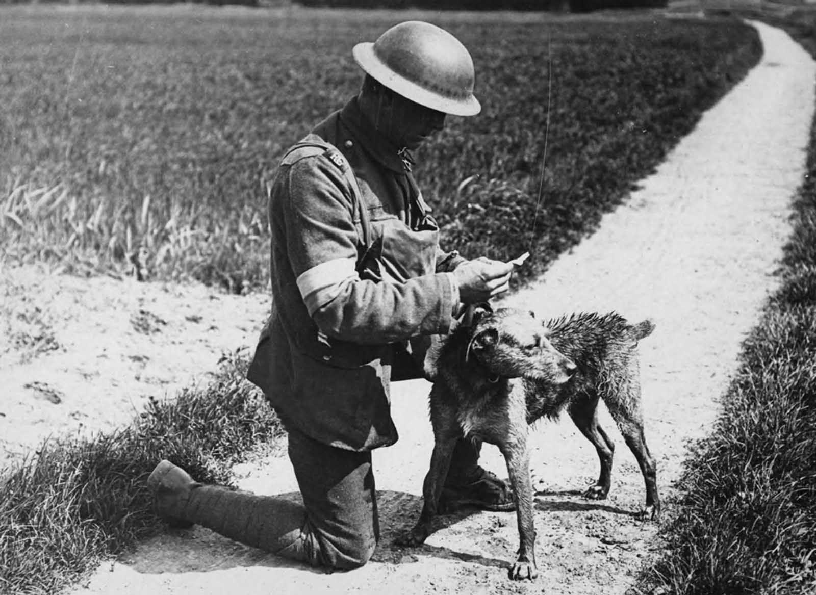 Animals In World War One 1914 1918 Rare Historical Photos World War One War Dogs Military Working Dogs