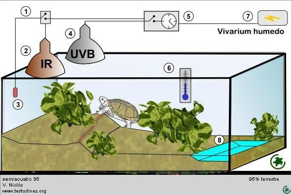 Como Hacer Un Terrario Para Tortugas Semiacuaticas Buscar Con Google Tortoise Enclosure Land Turtles Tortoises
