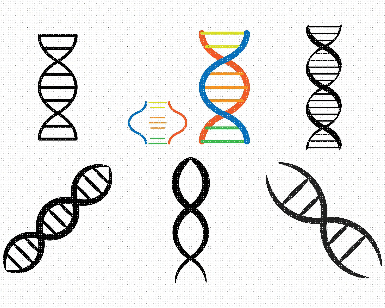 Dna Strand Svg Bundle Dna Strand Svg Genes Svg Helix Svg Etsy In 2021 Svg Unique Items Products Etsy