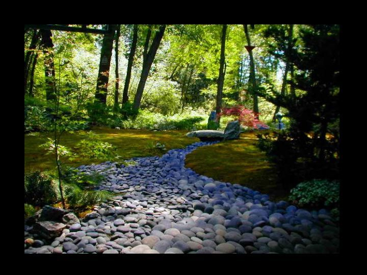 Japanese inspired Moss garden and stone river. CMC Design ...