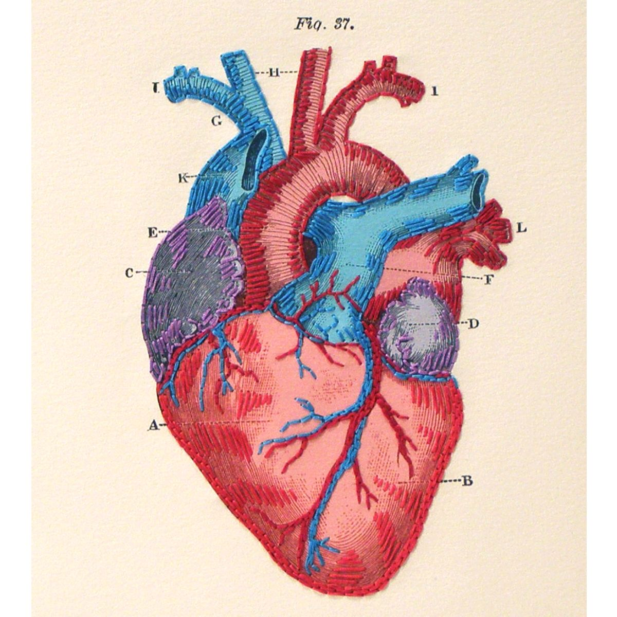 Fabulouscatpapers Anatomical Heart Embroidered Notebook Httpswww