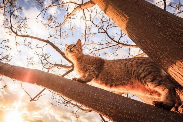 Кошка на дереве | Кошки, Животные, Фотографии
