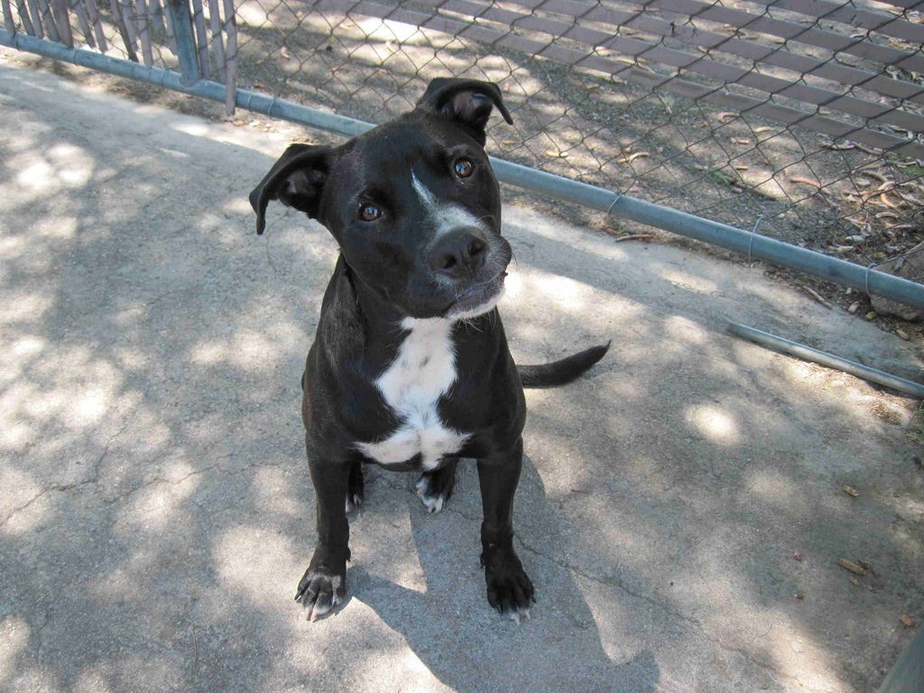Pin On Pit Boxer Mix