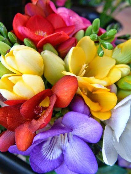 Google Freesia Plant Freesia Is A Genus Of Flowering Plants In The Family Iridaceae First Described As A Flores Maravilhosas Dicas De Jardinagem Belas Flores