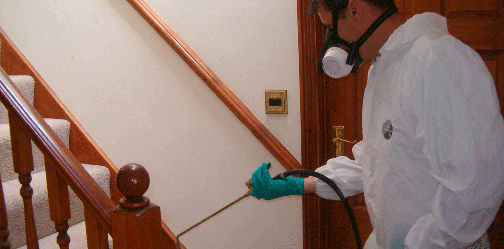 شركة مكافحة حشرات بابها Deep Carpet Cleaning Carpet Cleaning Business Carpet Cleaning Hacks