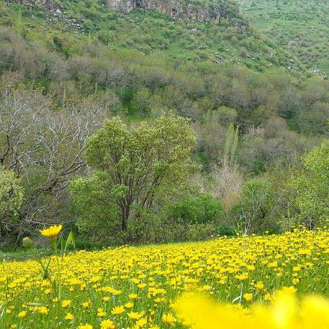 Spring in Ouramanat, Kirmaşan, Iran.