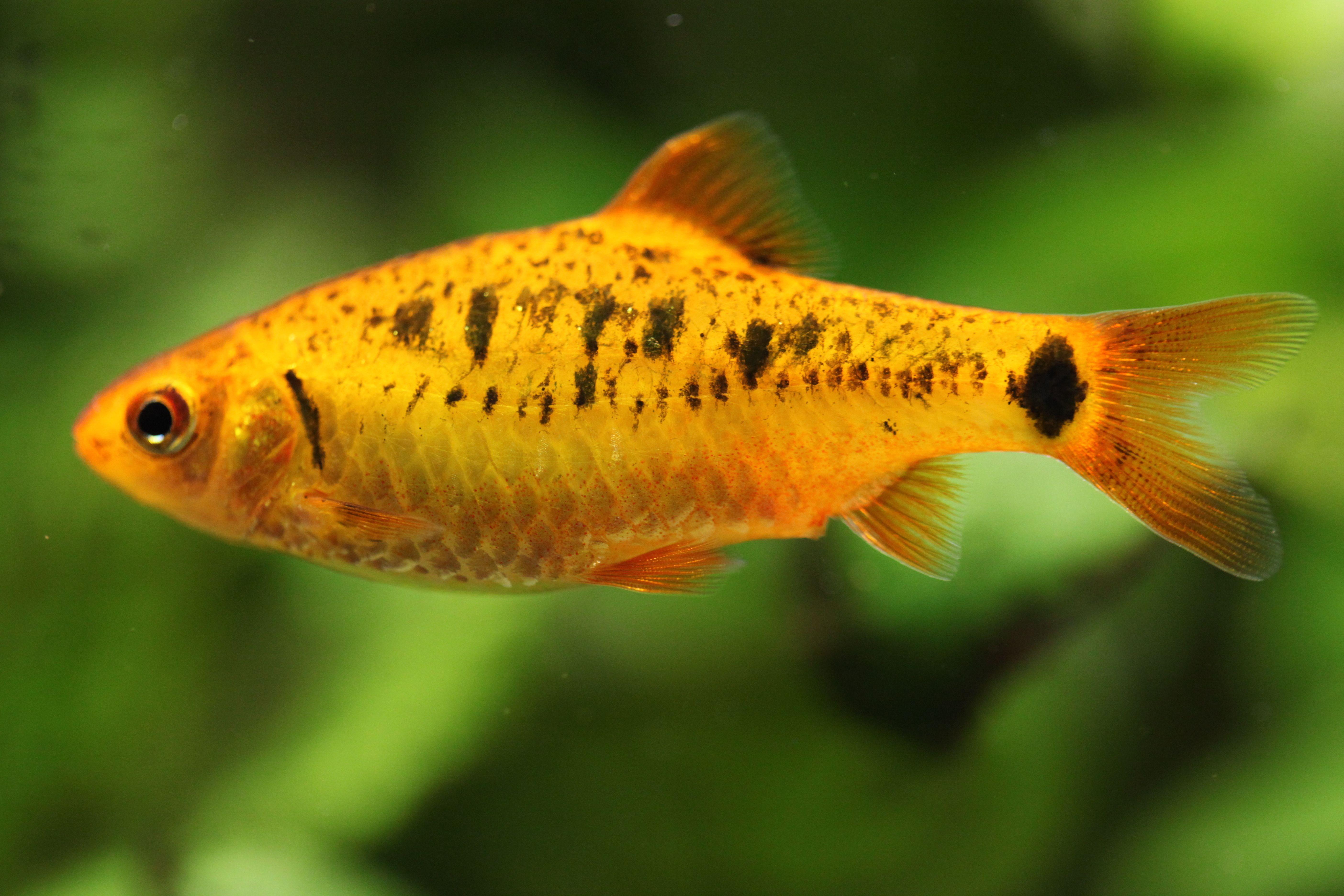Debate Between Bird And Fish Aquarium Fish Fish Animals