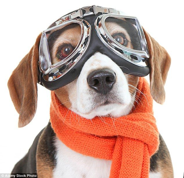 Dogs Might Fly TV show on Sky 1 shows dogs trained to FLY planes ...
