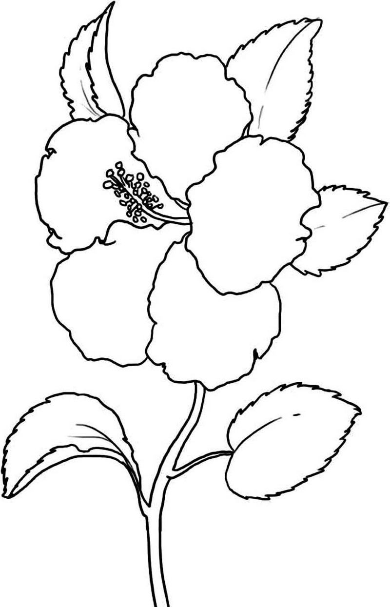 Beautiful Hibiscus Coloring Pages Online Flower Coloring Pages