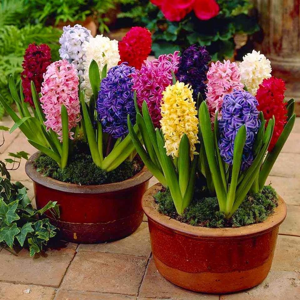 Spring is here here are some great ideas for potted flowers and spring is here here are some great ideas for potted flowers and fruit http mightylinksfo Image collections